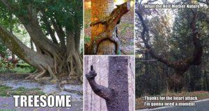 Mother Nature's Most Unique Trees
