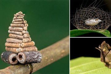 Mysterious Structures Insects