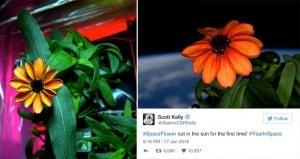 NASA Scott Kelly Grows First Flower Space