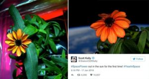NASA Scott Kelly Grows First Flower Space