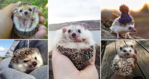 Remind You Hedgehogs Are Cute