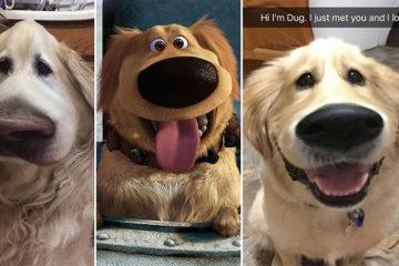 'Snapchat' Filter Dog 'Up'