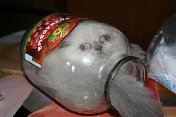 Stuck In Jar