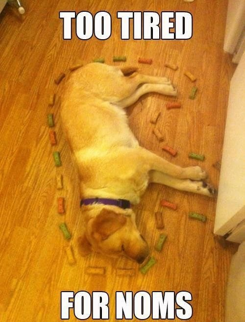 dog asleep with treats surrounding its body with text too tired for noms