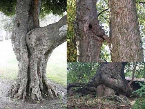 Trees Banging