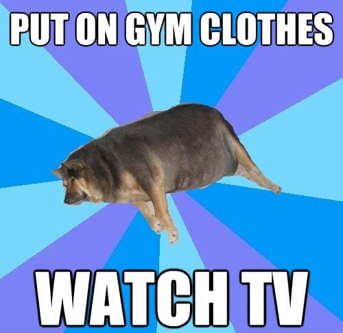 fat dog lying down put on gym clothes watch tv lazy meme