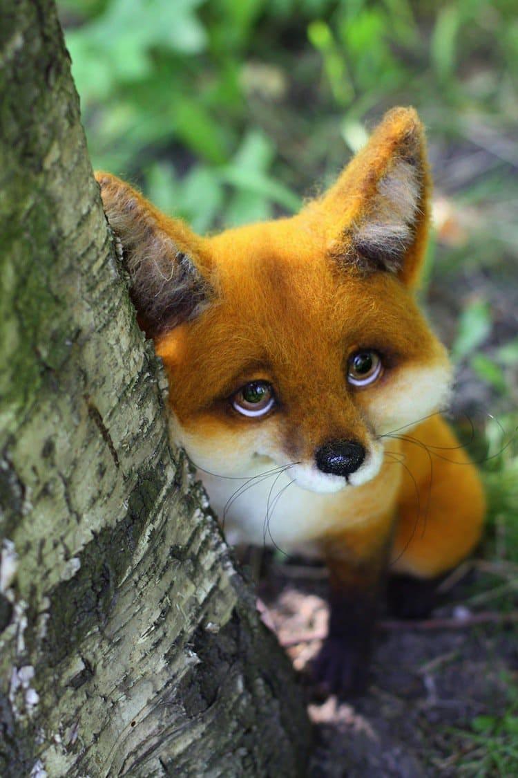 animals-fox