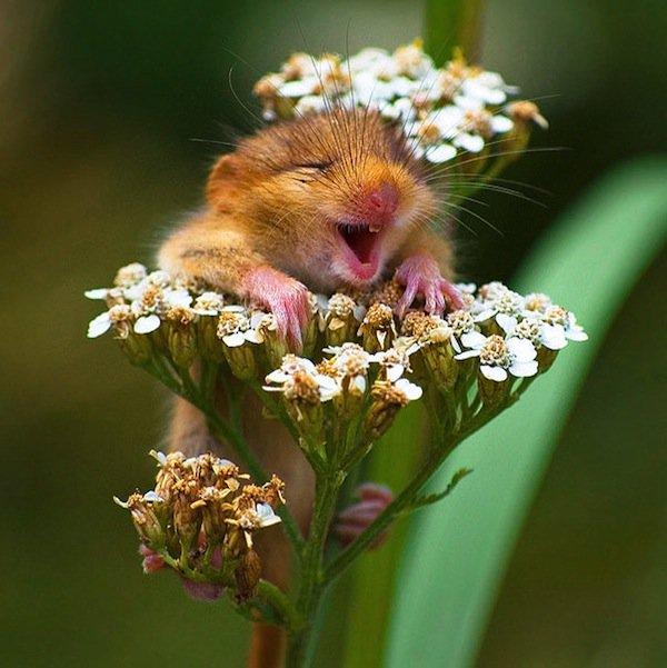 animals-hamster