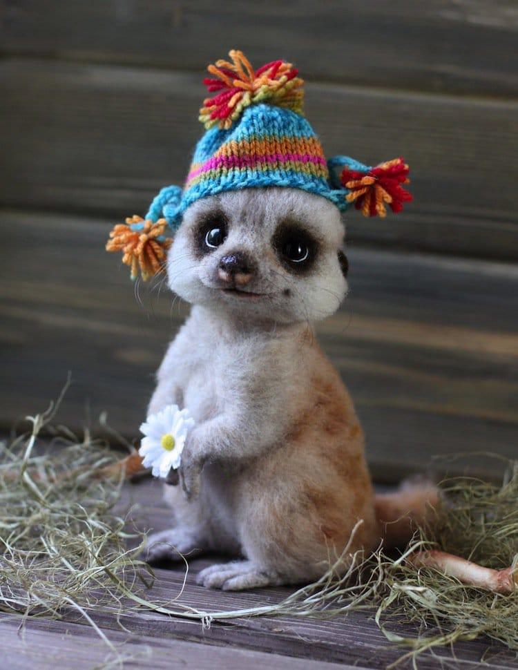 animals-meerkat