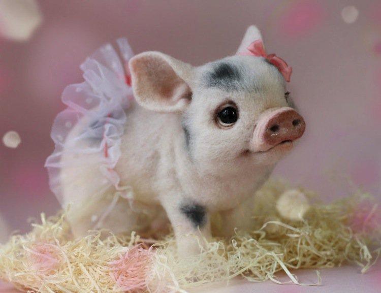 animals-pig
