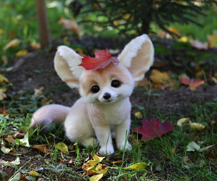 animals-pup