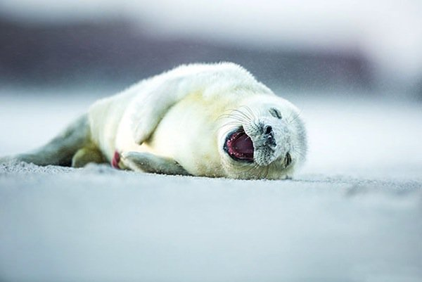 animals-seal