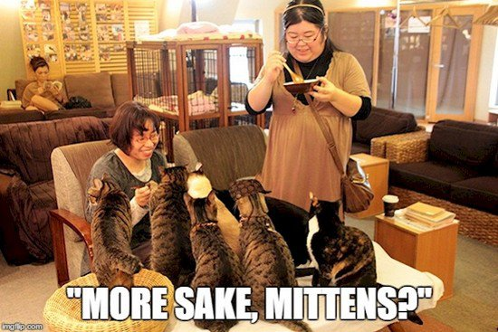 cat cafe sake