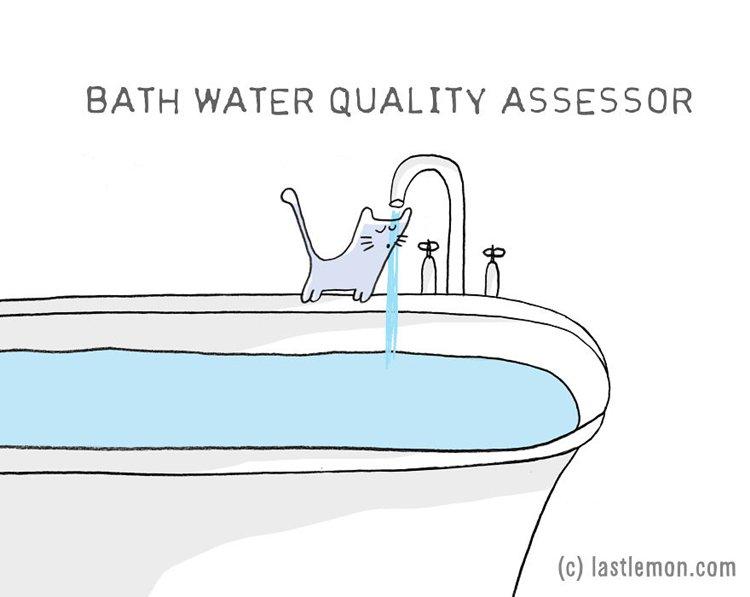 cat-jobs-bath