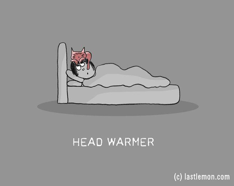 cat-jobs-head