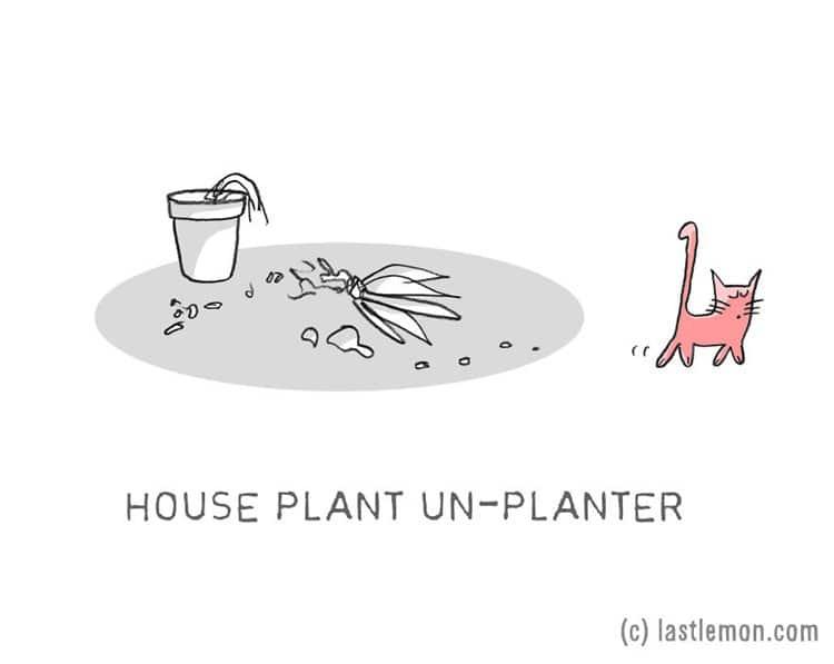 cat-jobs-plants