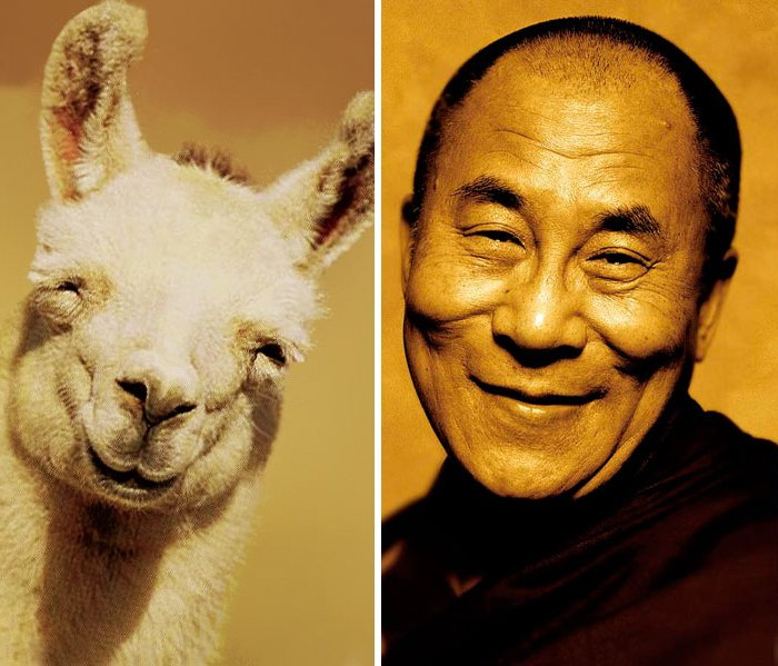 celeb-dalai