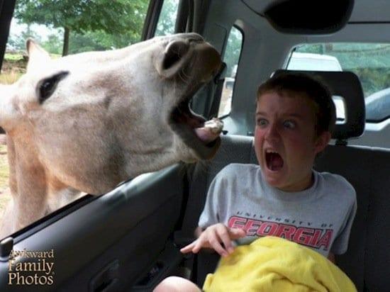 children-donkey
