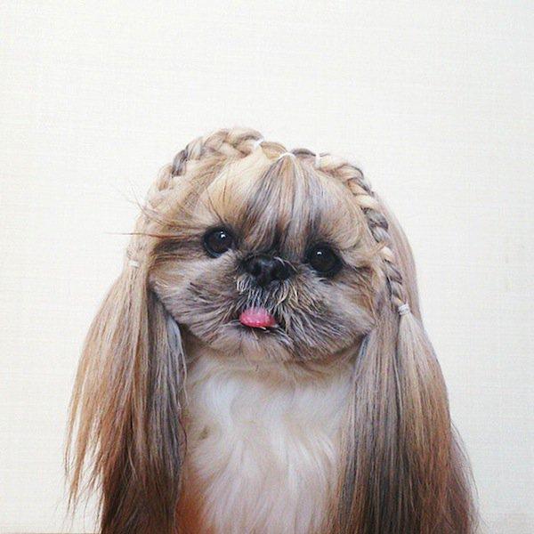 dog-braids