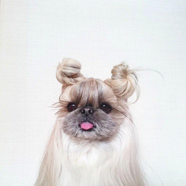dog-buns