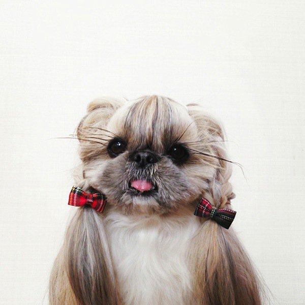 dog-cute