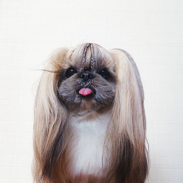 dog-hairstyle-cute