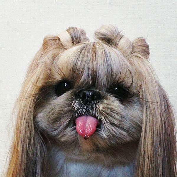 dog-hairstyle