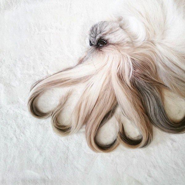 dog-tresses