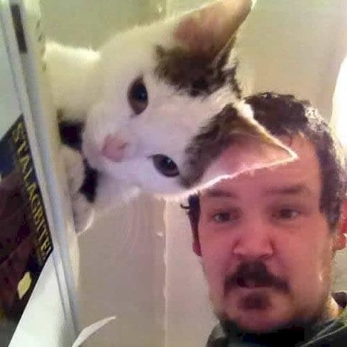 double-take-cat