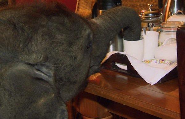 elephant-tea