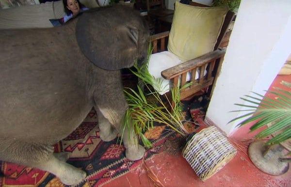 elephant=plant