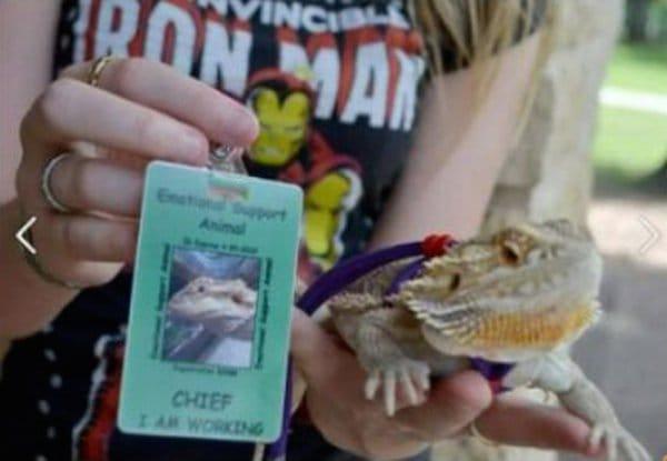 emo support lizard