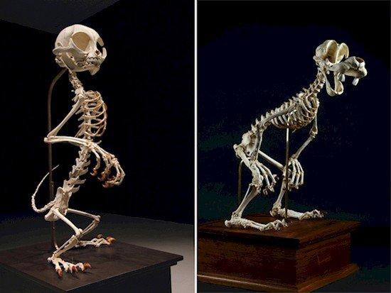 felix goofy skeletons