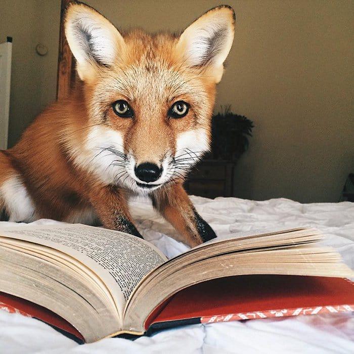 fox-book