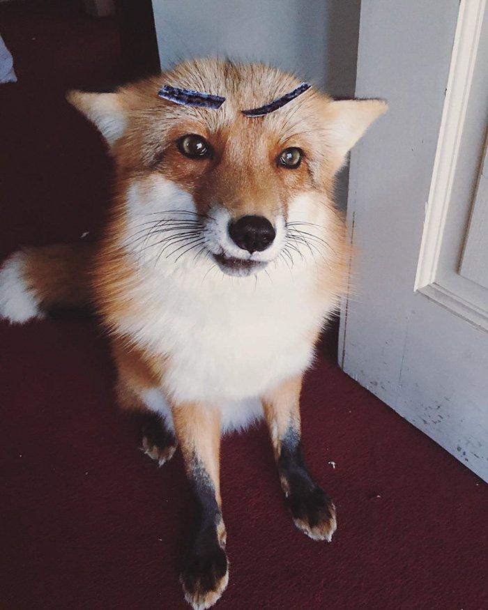 fox-cute