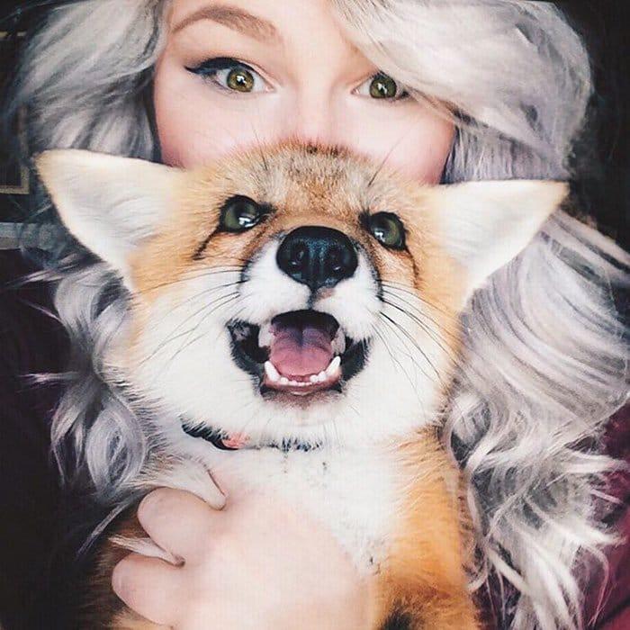 fox-teet