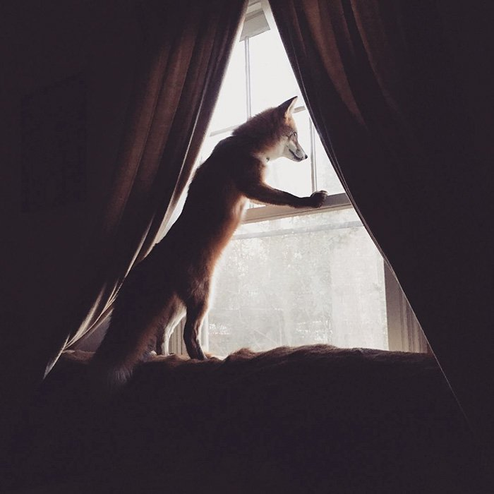 fox-window