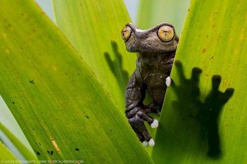 fresh-angle-frog