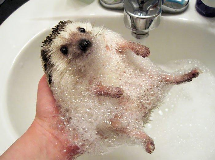 hedge-hog-bubbles
