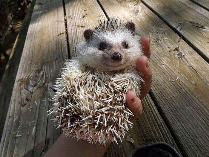 hedge-hog-happy