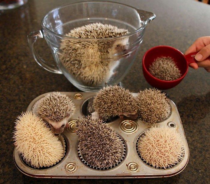 hedge-hog-muffins