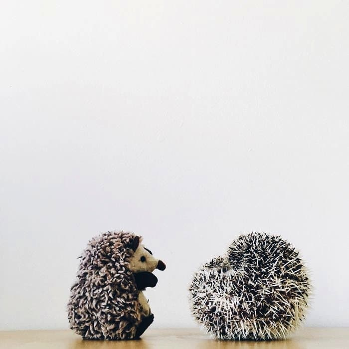 hedgehog-ball-two