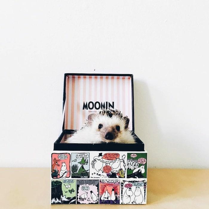 hedgehog-box