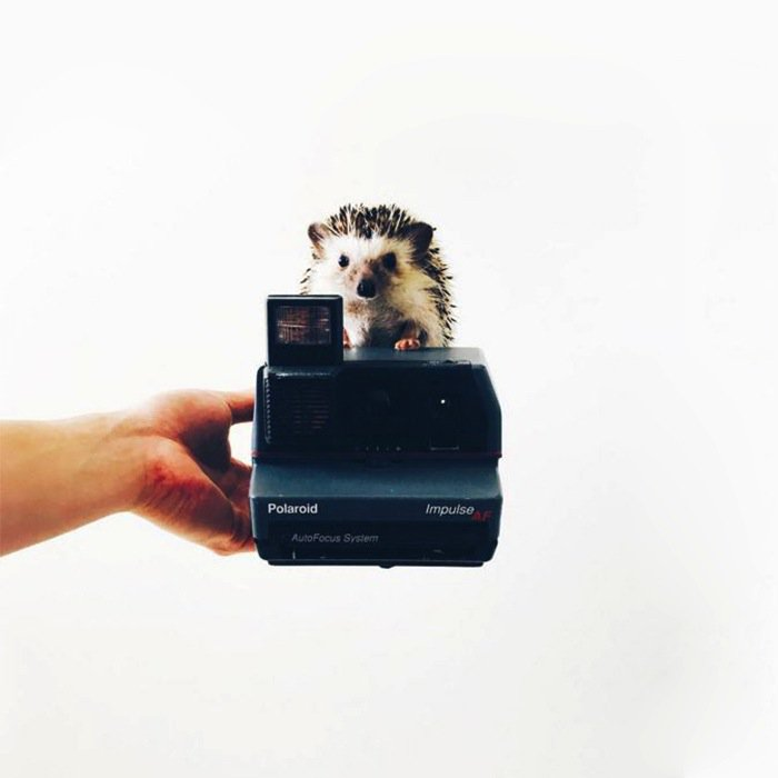 hedgehog-camera
