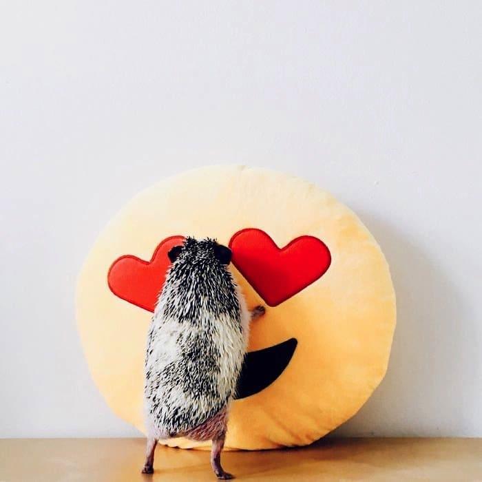 hedgehog-cushion