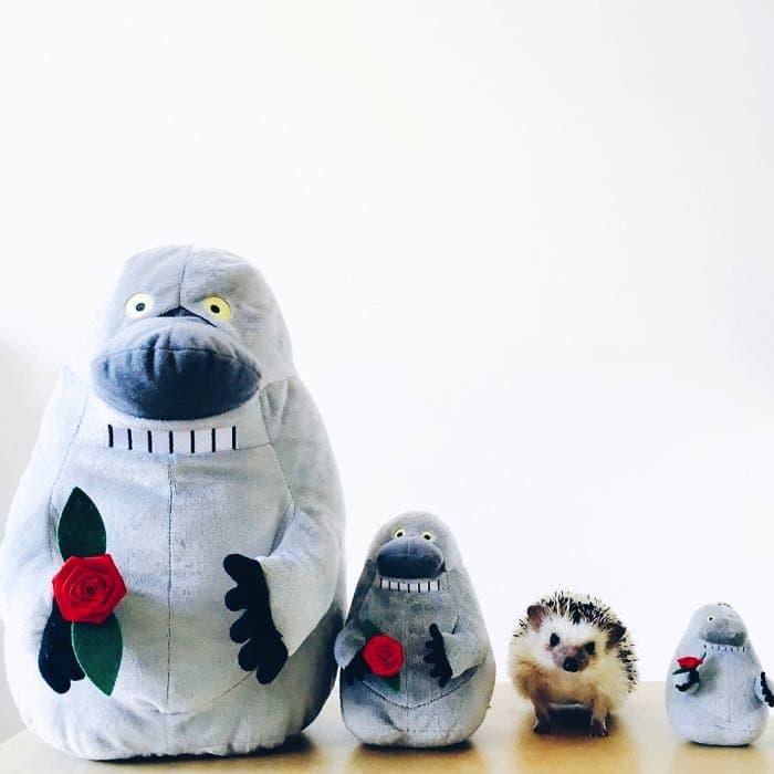 hedgehog-lineup