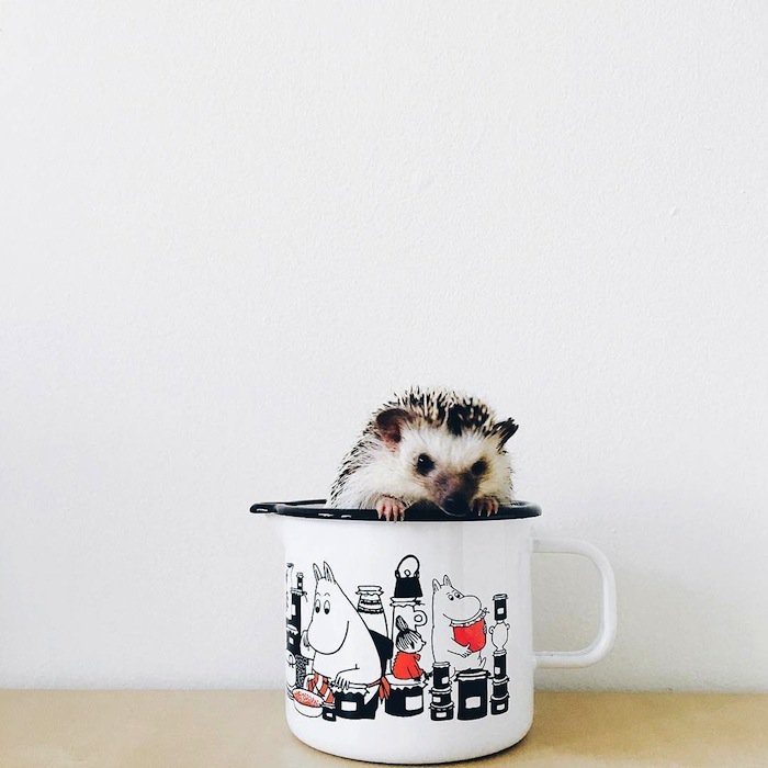 hedgehog-mug