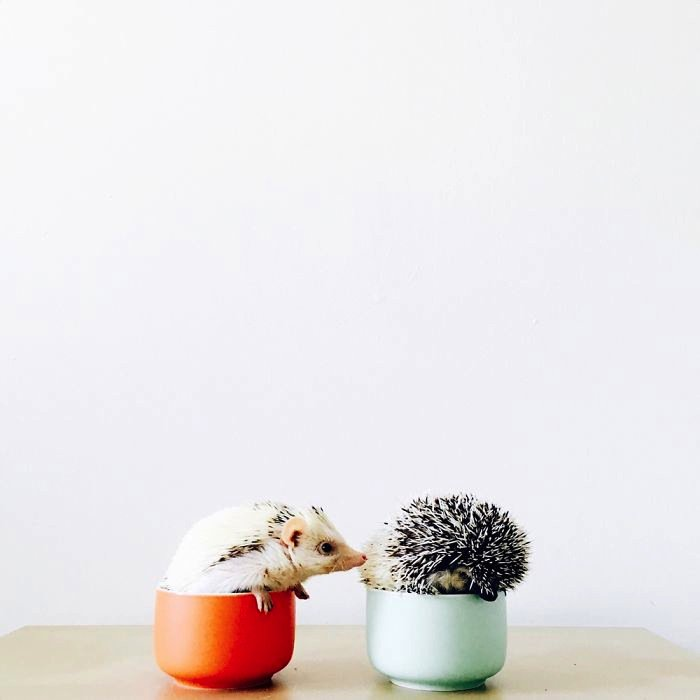hedgehog-s