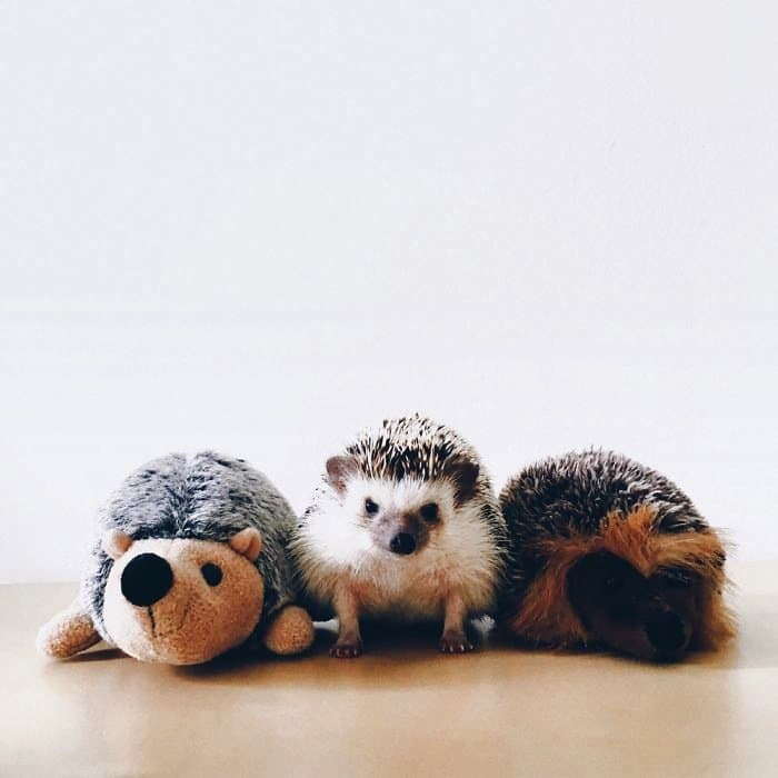 hedgehog-toy