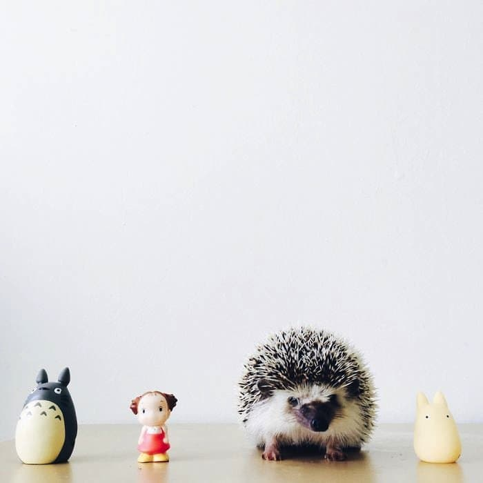 hedgehog-toys
